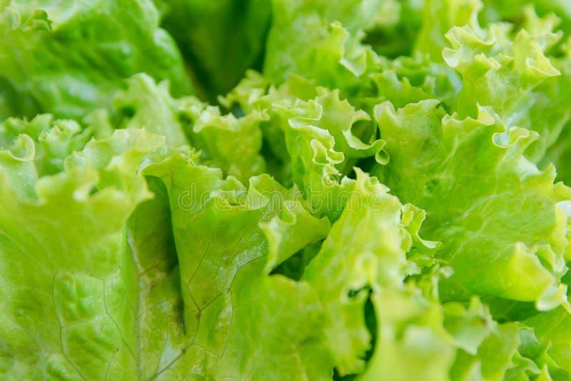 Hoja de la ensalada Fondo de la lechuga Fondo de las verduras foto de archivo