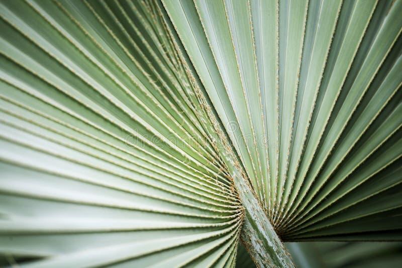 Hoja de la fronda Hoja de palma verde grande de la selva fotografía de archivo libre de regalías