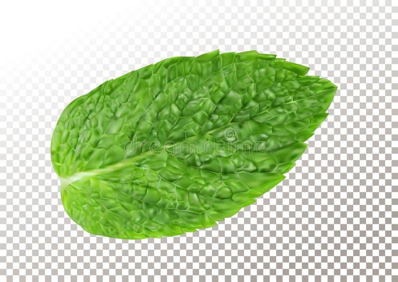 Hoja de la menta fresca Ejemplo del vector del aroma sano del mentol Planta herbaria de la naturaleza Hojas verdes realistas de l stock de ilustración