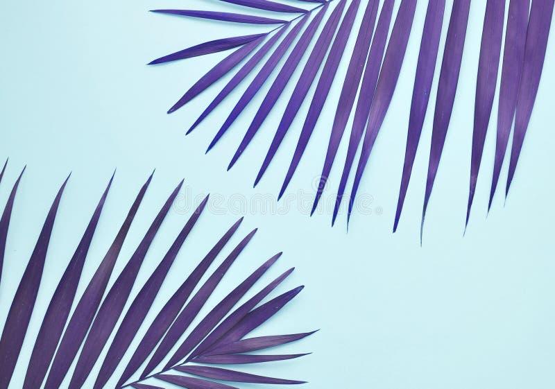 Hoja de la palmera en color de moda imagen de archivo