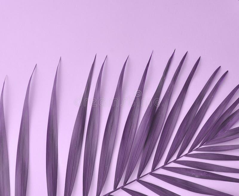 Hoja de la palmera en color de moda foto de archivo