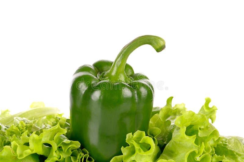 Hoja de la pimienta verde y de la ensalada aislada foto de archivo libre de regalías