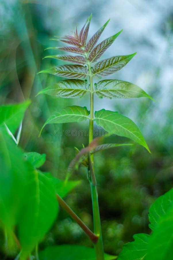 Hoja de la planta silvestre, admitida el bosque, con la abertura grande fotos de archivo libres de regalías