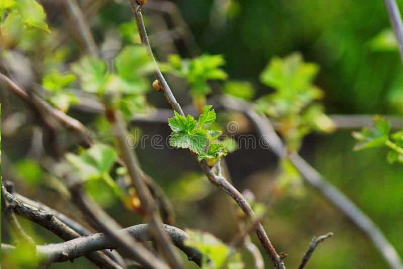 Hoja de los ?rboles forestales Fondos de madera verdes de la luz del sol de la naturaleza Hola primavera imágenes de archivo libres de regalías