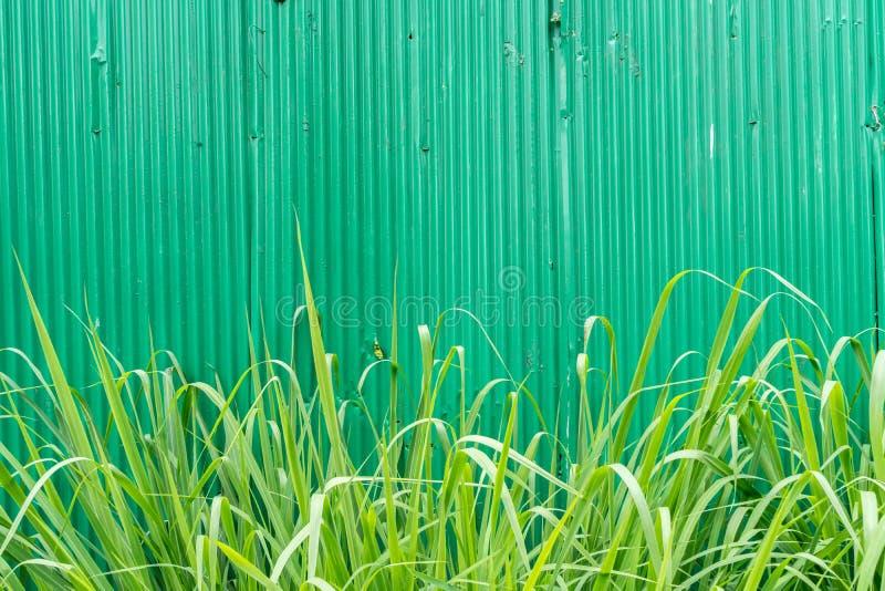 Hoja de metal verde fotografía de archivo