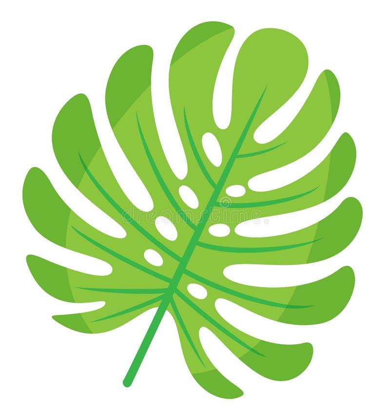 Hoja de Monstera, follaje de las zonas tropicales, decoración ilustración del vector