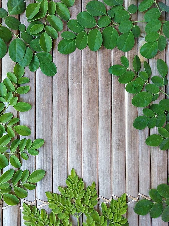 Hoja de Moringa con el fondo de bambú imagen de archivo
