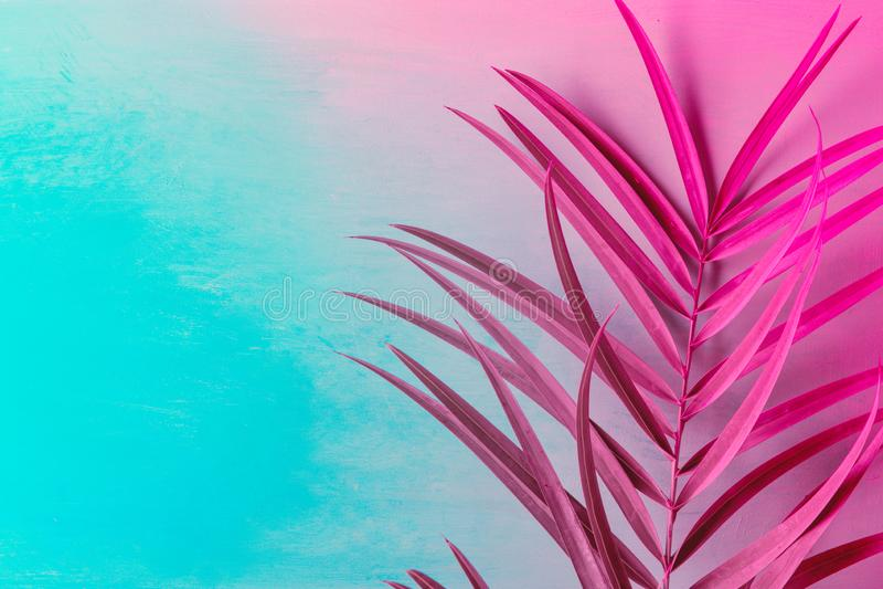 Hoja de palma grande en fondo azul violeta púrpura del duotone Colores de neón de moda entonado Estilo minimalista Creativo único foto de archivo