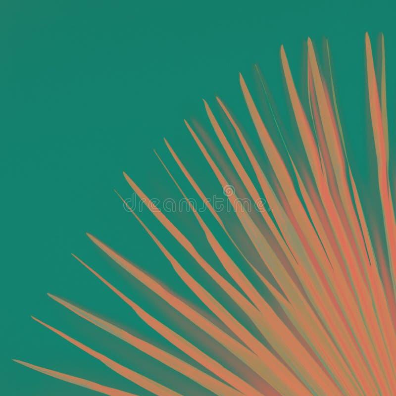 Hoja de palma tropical con el fondo colorido, color de moda entonado de la turquesa del rosa fotografía de archivo