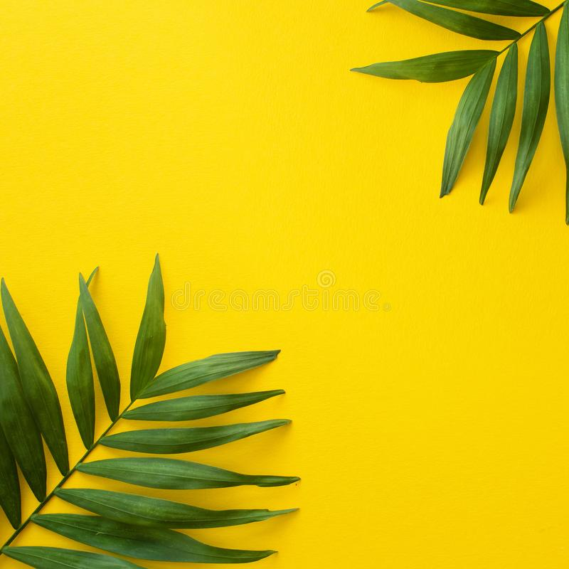Hoja de palma tropical en fondo cuadrado amarillo brillante imagen de archivo