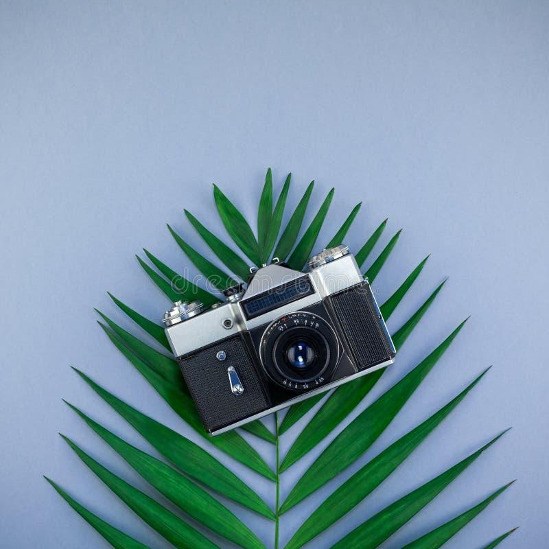 Hoja de palma tropical y viejo fondo de la cámara de la foto foto de archivo libre de regalías