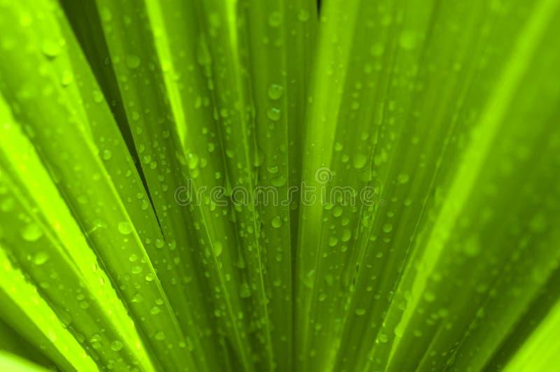 Hoja de palma verde foto de archivo libre de regalías