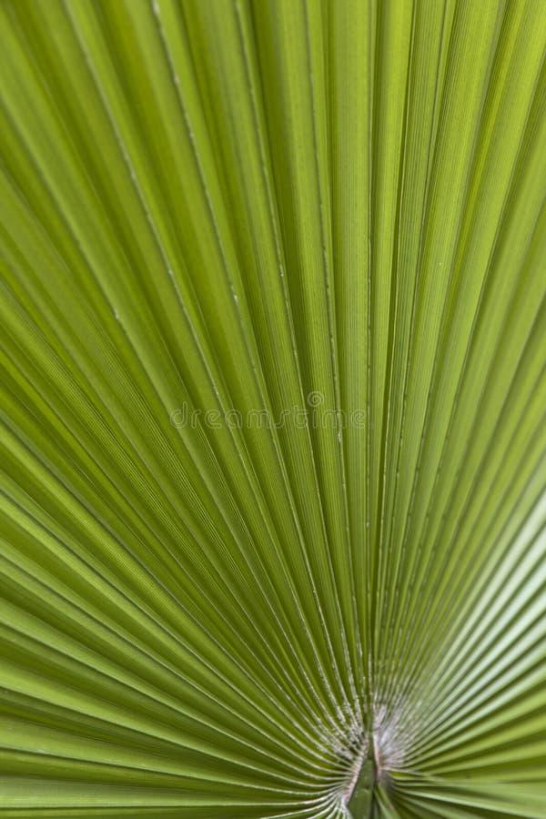 Hoja de palma verde imágenes de archivo libres de regalías