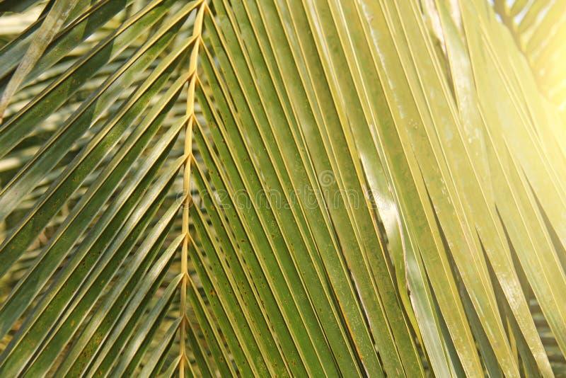 Hoja de palma y sol verdes Fondo verde de palmeras exótico fotos de archivo