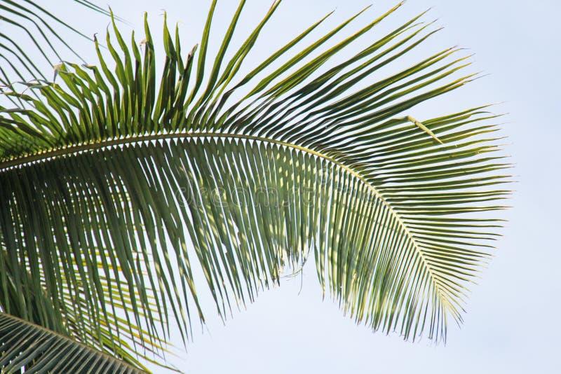 Hoja de palma y sol verdes hermosos Fondo verde de la palmera fotografía de archivo libre de regalías