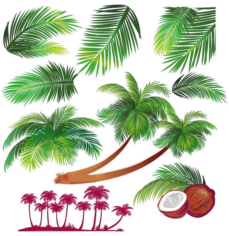 Hoja de palmas tropical ilustración del vector