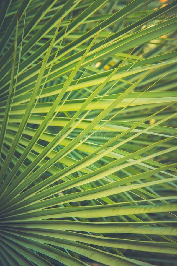 Hoja de punta redonda grande de la palmera en la llamarada de oro de Sun Color verde oscuro Estilo de moda Matte Toned Effect del imagen de archivo libre de regalías