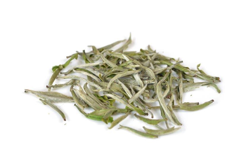 Hoja de té blanca imagenes de archivo