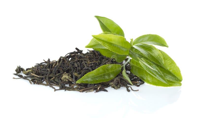 Hoja de té verde fotos de archivo