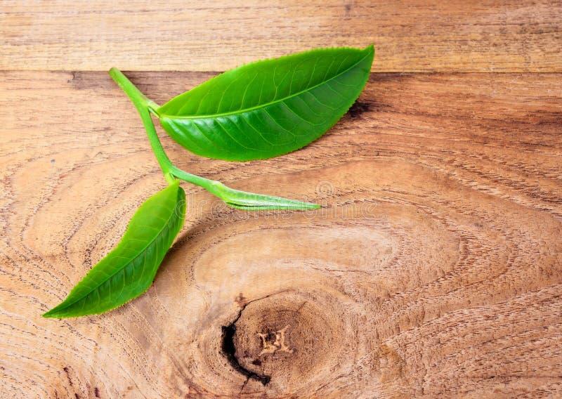 Hoja de té verde imagenes de archivo