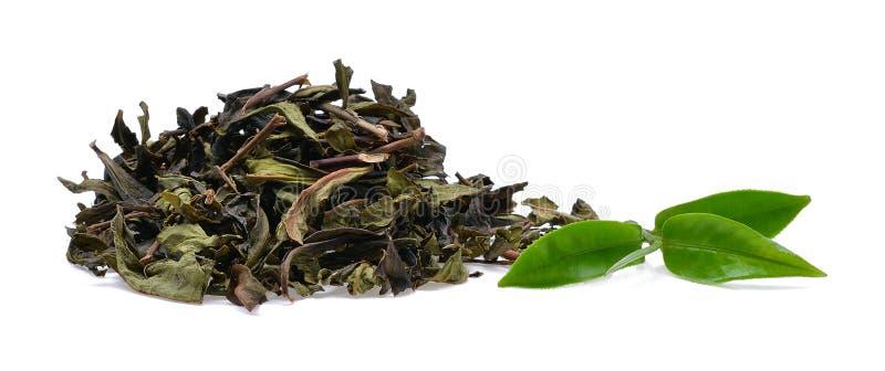 Hoja de té verde foto de archivo