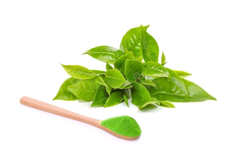 Hoja de té verde y té verde del polvo en aislante de madera de la cuchara en w imágenes de archivo libres de regalías
