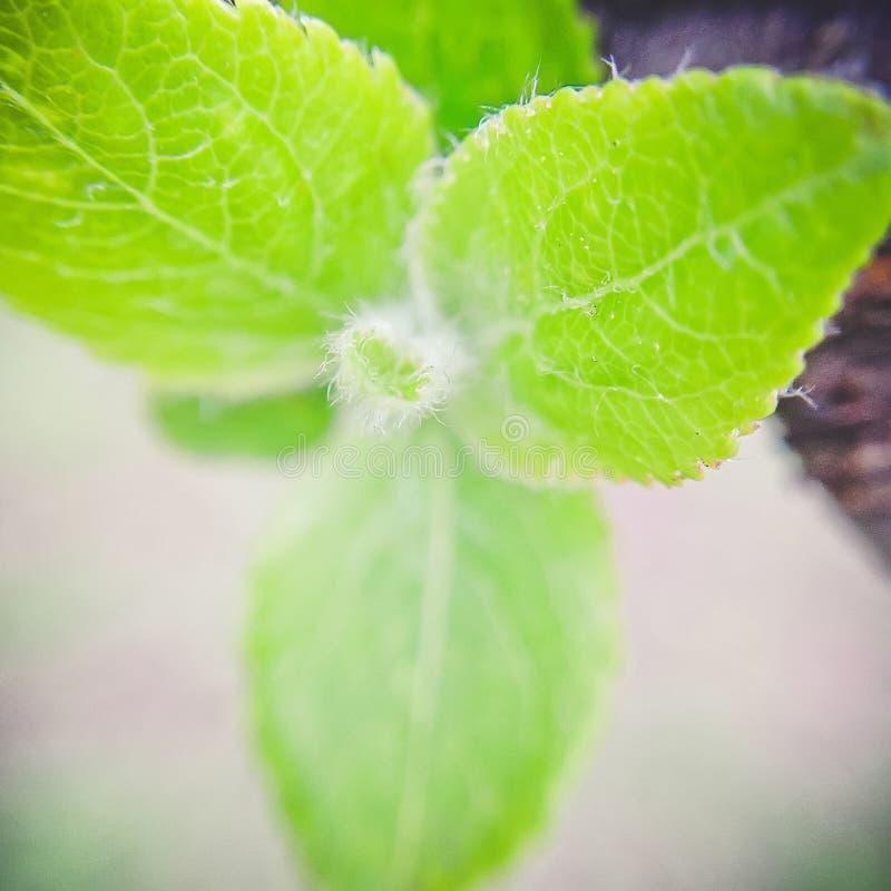 Hoja de un manzano verde Opini?n del primer imagen de archivo libre de regalías