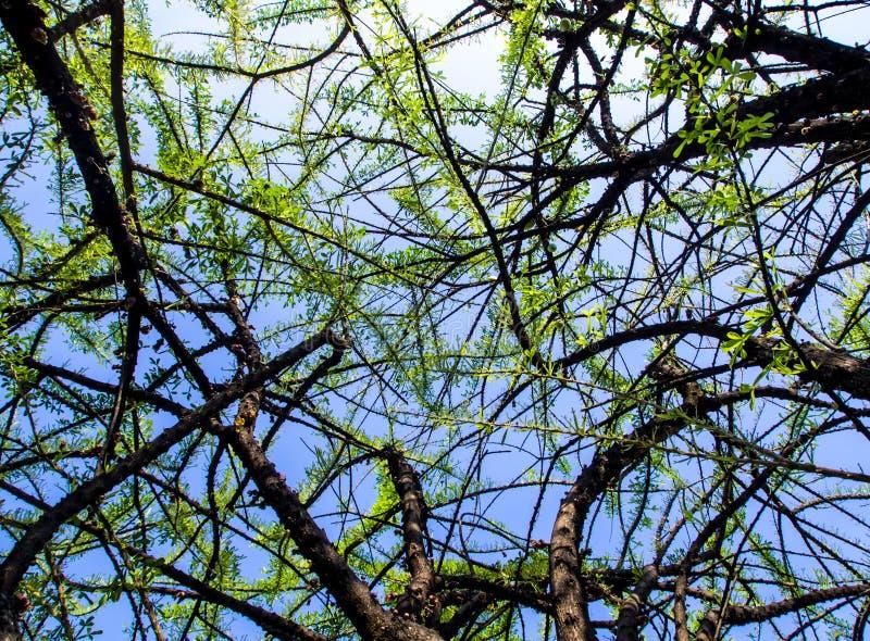 Hoja del árbol de calabaza imagen de archivo libre de regalías
