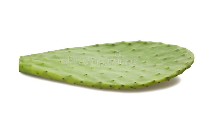 Hoja del cactus imagen de archivo libre de regalías