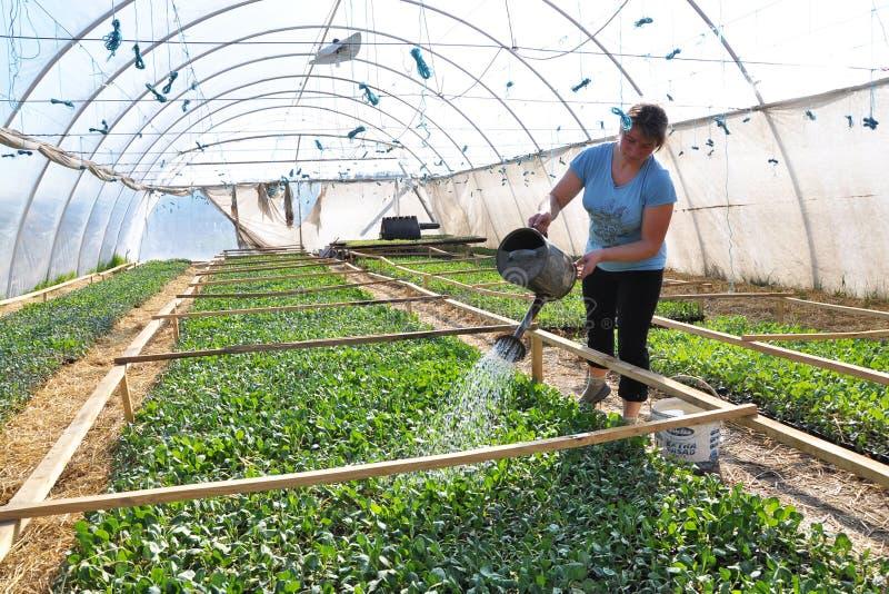 Hoja del invernadero para crecer verduras tempranas foto de archivo libre de regalías