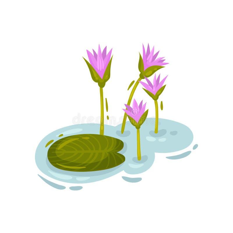 Hoja del lirio al lado de los brotes púrpuras Ilustraci?n del vector en el fondo blanco ilustración del vector