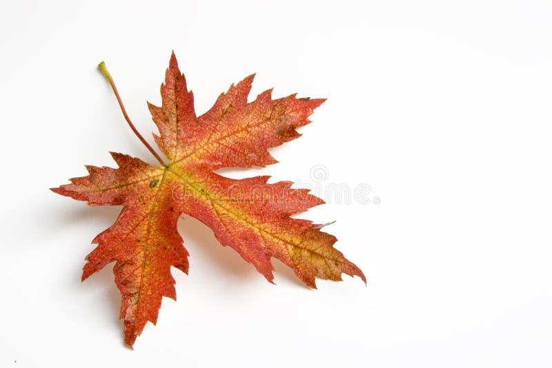 Hoja del otoño fotografía de archivo
