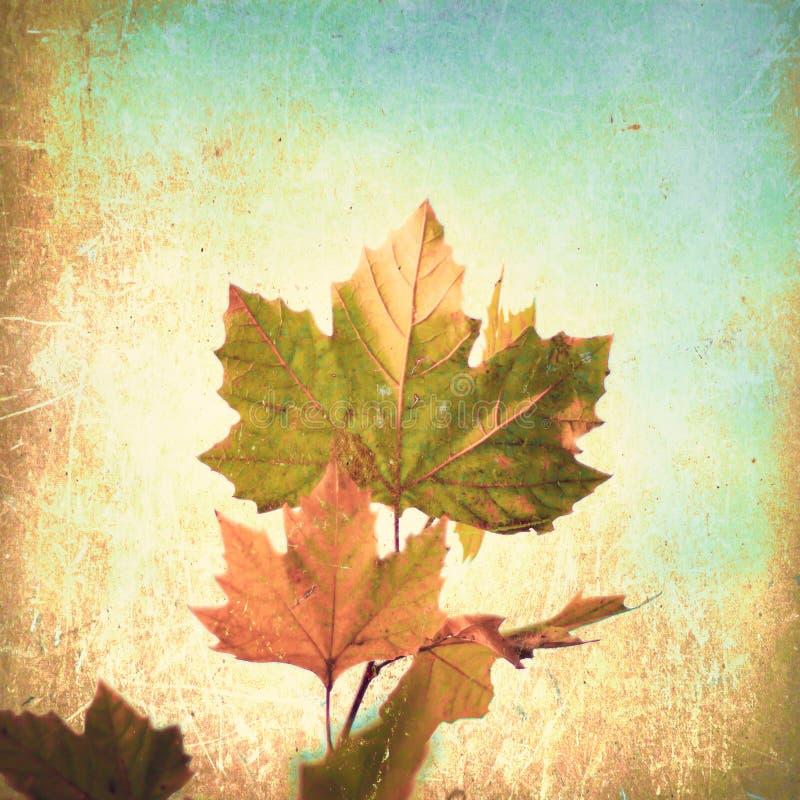 Hoja del otoño ilustración del vector