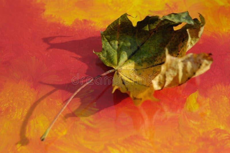Hoja del otoño foto de archivo