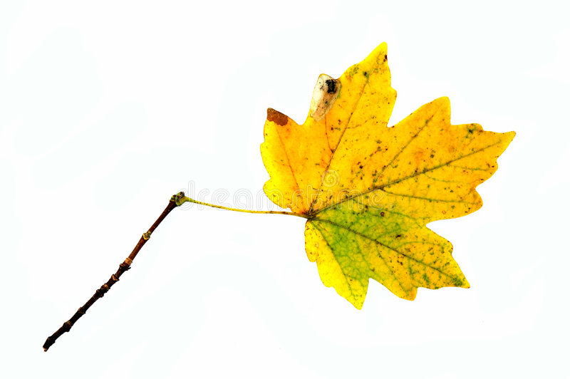 Hoja del otoño? fotografía de archivo