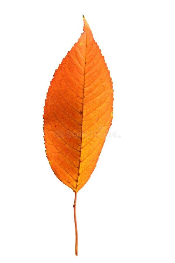Download Hoja del otoño foto de archivo. Imagen de octubre, color - 41901314