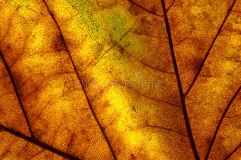 Download Hoja del otoño foto de archivo. Imagen de hoja, detalle - 7288836