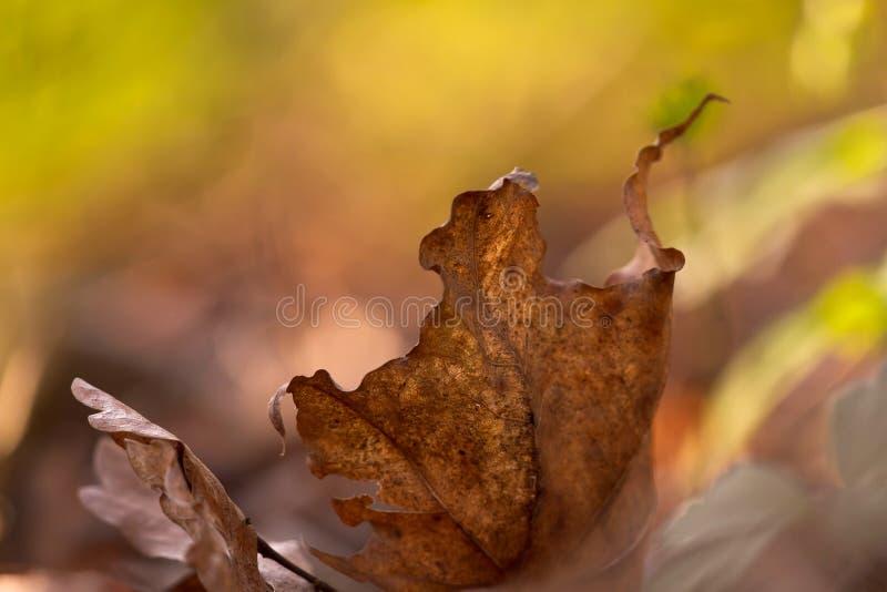 Hoja del otoño del baile imagen de archivo