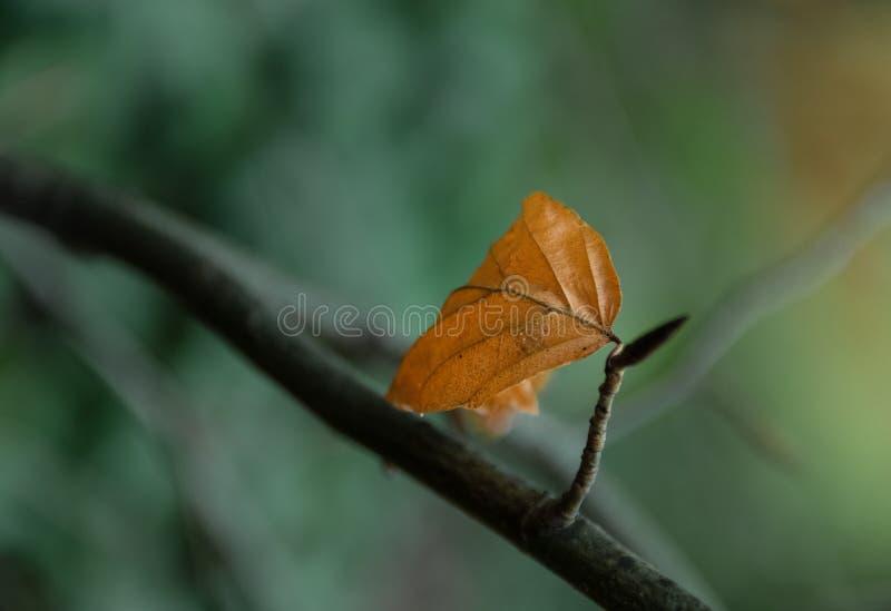 Hoja del otoño en foco y fondo fuera del foco/de la hoja anaranjada en foco y un fondo borroso imagen de archivo