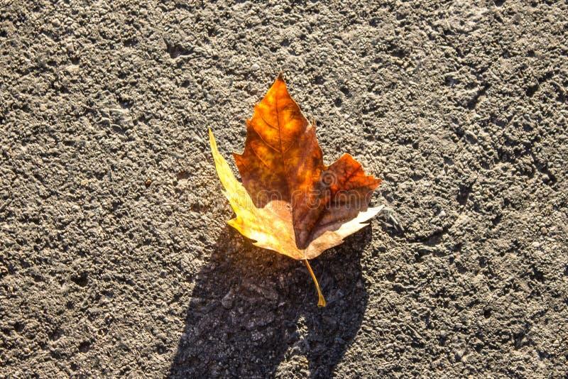 Hoja del otoño en la calle imagen de archivo