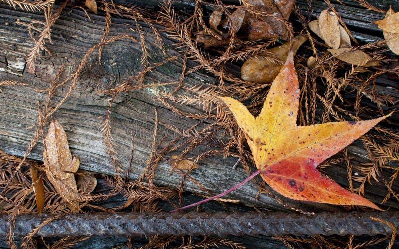 hoja del otoño en la madera fotografía de archivo libre de regalías
