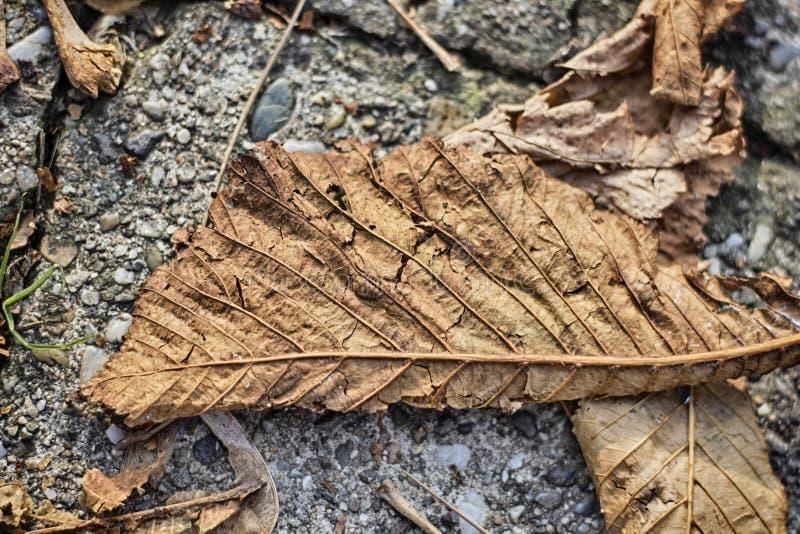 Hoja del otoño en la tierra imagen de archivo