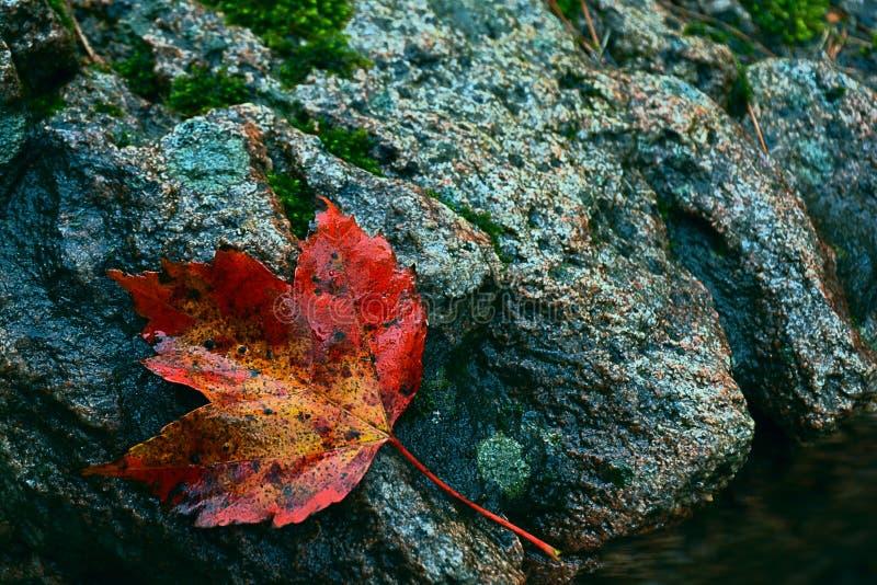 Hoja del otoño por el borde del agua fotografía de archivo