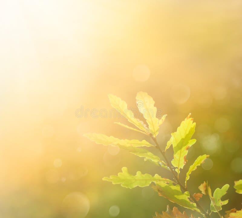 Hoja del otoño por la mañana imagenes de archivo