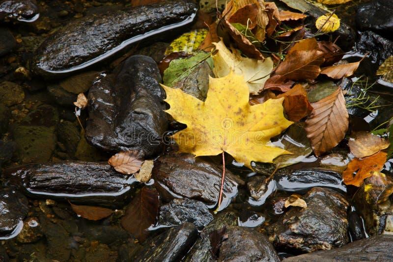 Hoja del otoño que flota en el río imagen de archivo