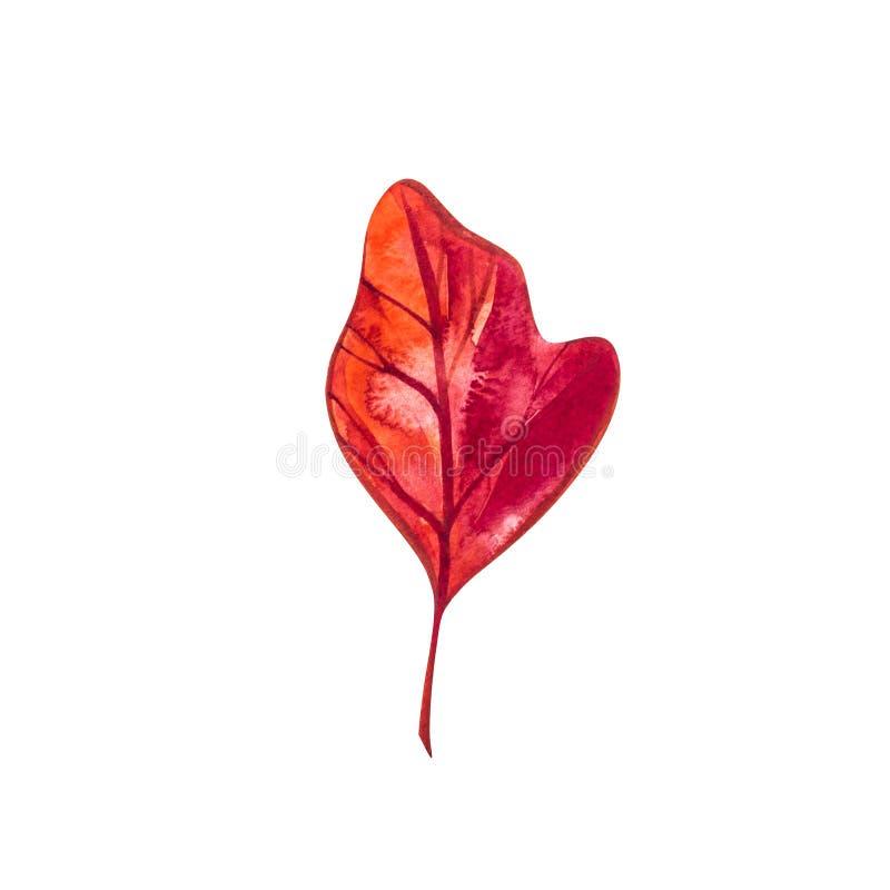 Hoja del otoño - sasafrás Hoja de arce del otoño aislada en un fondo blanco Ilustración de la acuarela stock de ilustración