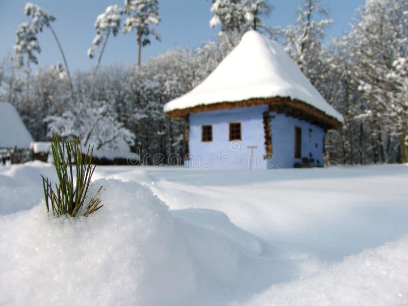 Hoja del pino en nieve imagen de archivo