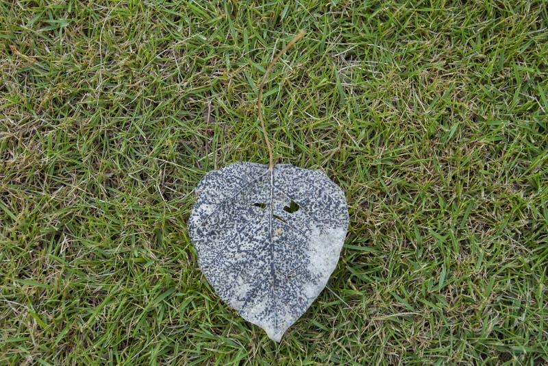 Hoja del Po que pone en la tierra de la hierba verde foto de archivo libre de regalías