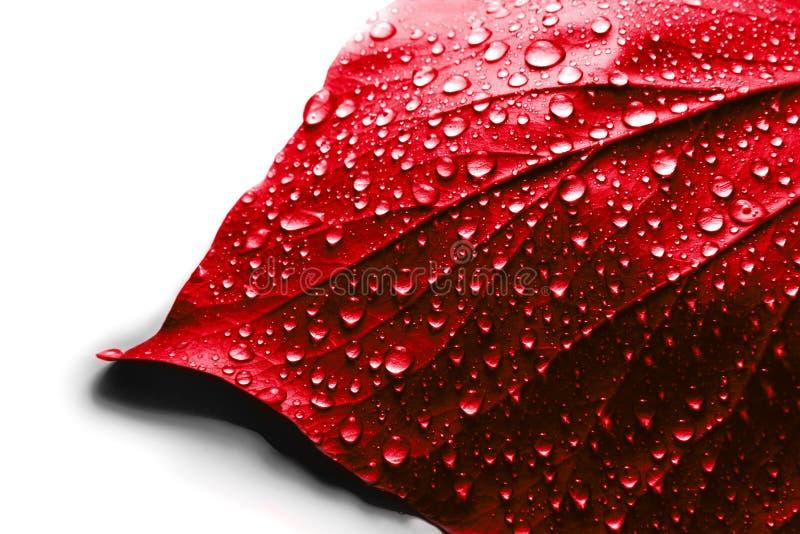 Hoja del rojo del día de tarjeta del día de San Valentín fotos de archivo libres de regalías