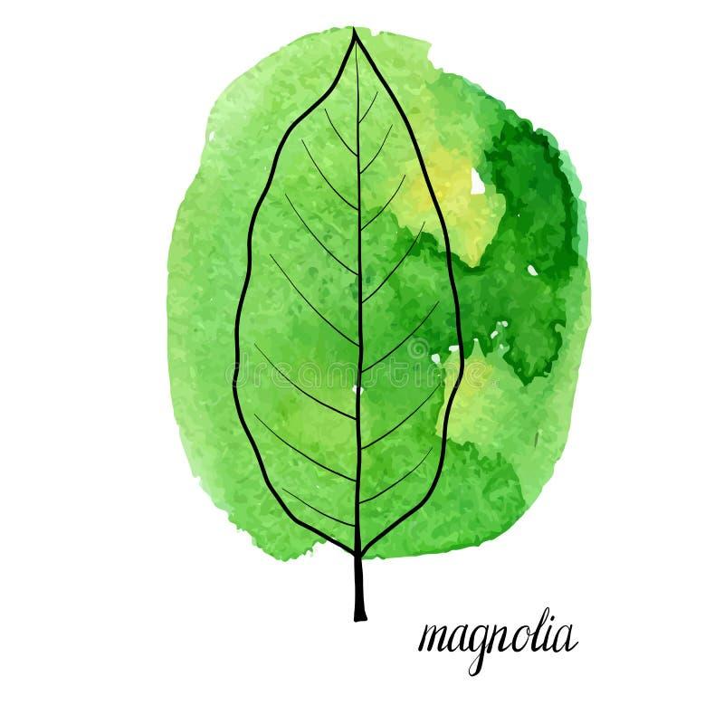 Hoja del vector del árbol de la magnolia ilustración del vector